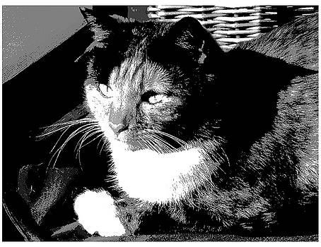 Stray Cat by Patricia Frankel