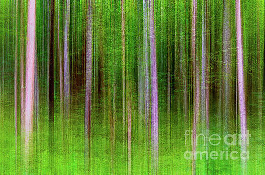 Streaks of forest trees artistic effect version three by Jeffery Johnson