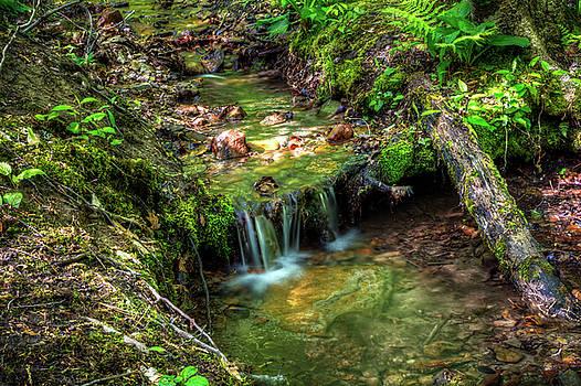 stream in Cumming Nature Center by Tim Buisman
