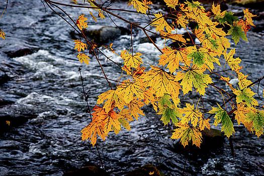 Stream in Fall by Joe Shrader