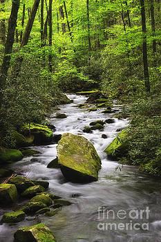Jill Lang - Stream in Joyce Kilmer Forest
