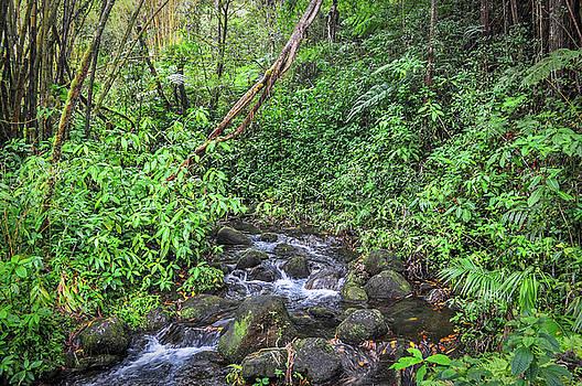 Stream In The Rainforest by Denise Bird