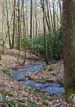 Stream in the Winter Woods by Denise Romano
