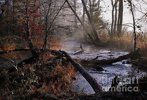 Stream of Tranquility by Douglas Stucky