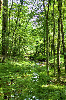 Stream Through a Forest 1P by Terry Thomas