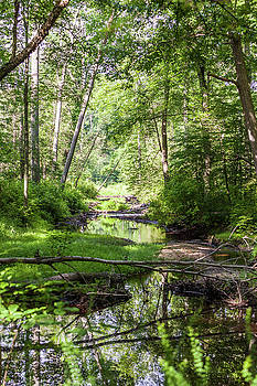 Stream Through a Forest 2P by Terry Thomas