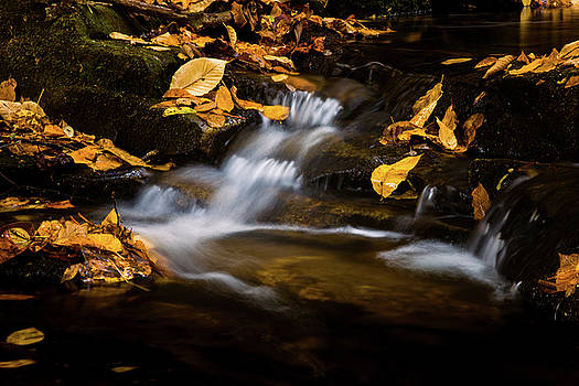 Streams of Gold by Blue Ridge Mountain Life