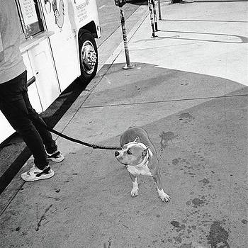 #streetshooting #dog #dogsofinstagram by Timothy Guest