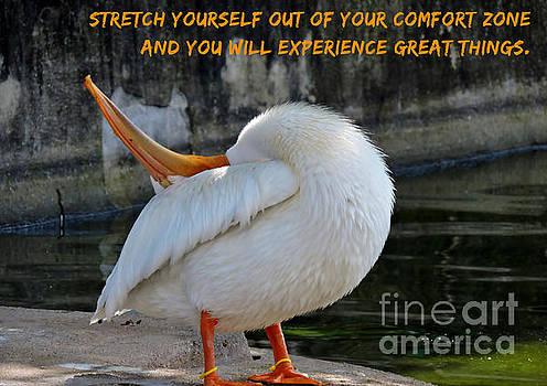 Annerose Walz - Stretch yourself