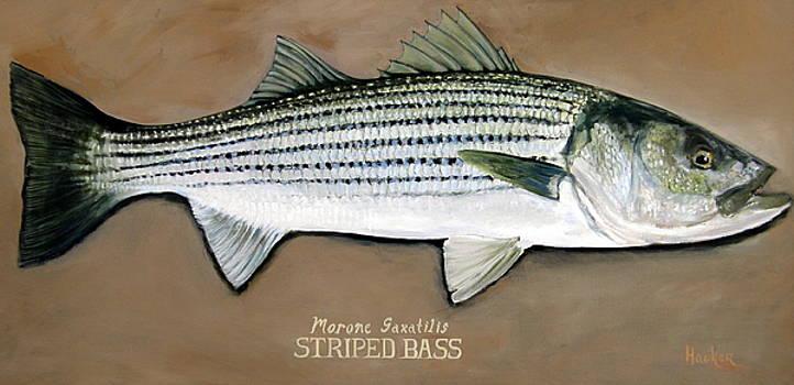 Striped Bass by Glen Hacker