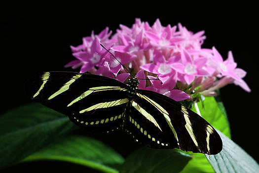Stripes and flowers by Ruth Jolly