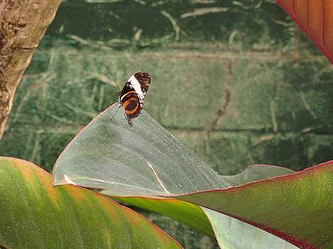 Striped Butterfly Come Alive by Mozelle Beigel Martin