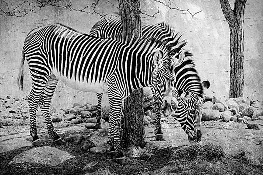 Stripped Pair by Jeff Swanson