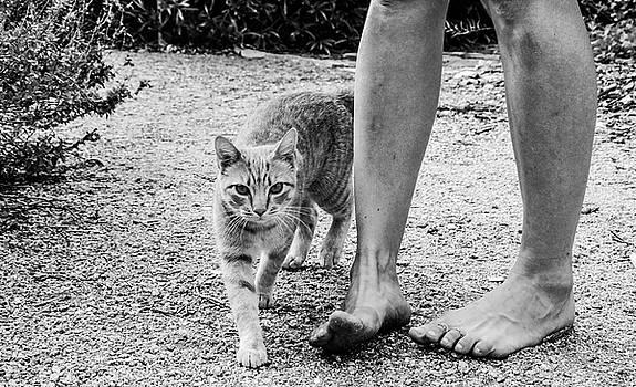 Strolling by Chaznik Raab