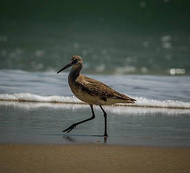 Strolling on the Beach by Debbie Morris