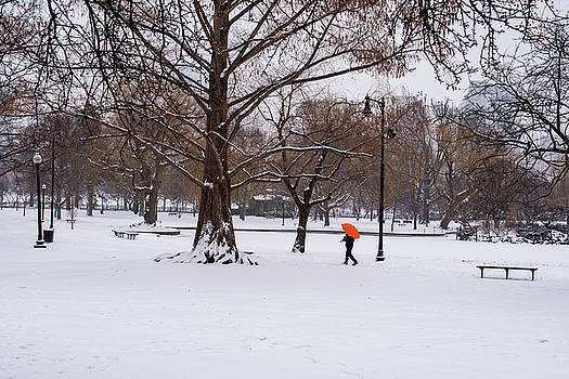 Toby McGuire - Strolling the Boston Public Garden on a snowy morning Boston MA
