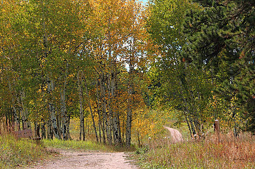 Strolling Through Autumn Aspens and Pines in Colorado by Gretchen Wrede