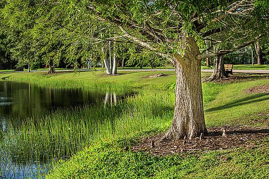 Stuart Pond  by Alida Thorpe