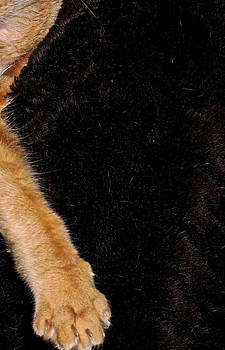 Study In Fur by David Roe