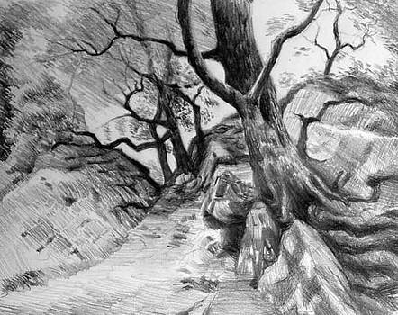 Study in Trees by William Hay