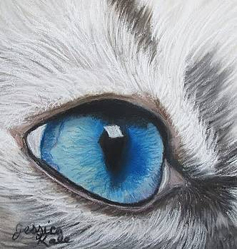 Study of a Cat's Eye by Jessica Kale