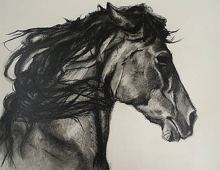 Study Of A Horses Head by Veronica Coulston