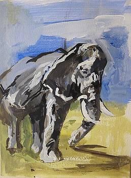Study Of Elephant by Colette Wirz