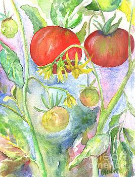Study of My Tomatoes by Bev Veals