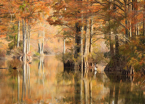 Stumpy Lake Autumn by Beth Fox