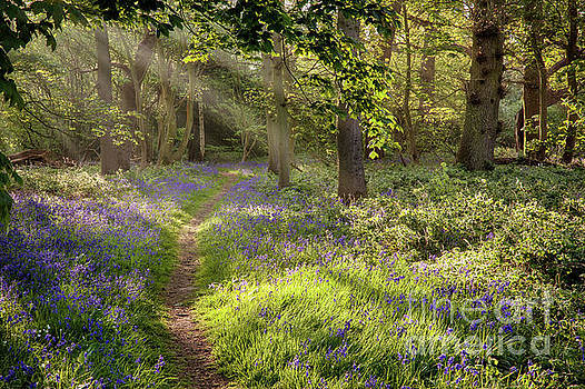Stunning bluebell woodland path with magical light by Simon Bratt Photography LRPS
