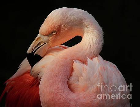 Paulette Thomas - Stunning Flamingo