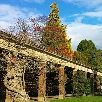 Stunning, Knarled Winter's Garden In by Dante Harker