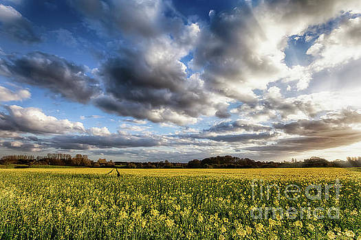 Stunning rapeseed fields at sunset by Simon Bratt Photography LRPS