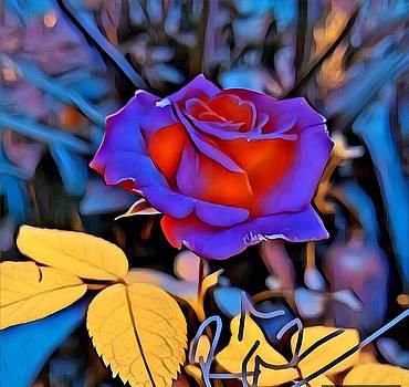 Rizwana Mundewadi - Stunning Rose