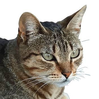 Tracey Harrington-Simpson - Stunning Tabby Cat Close Up Portrait Vector Isolated