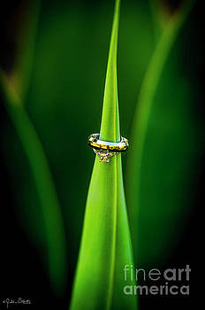 Julian Starks - Stunning wedding rings on a leaf