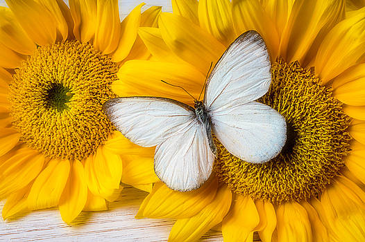 Stunning White Butterfly by Garry Gay