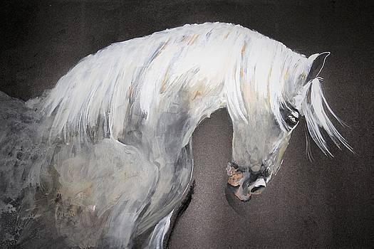 Stylish stallion by Khalid Saeed