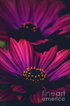 Sublime by Sharon Mau