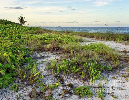 Sublime Subtropcial Sunset - Natural Florida Coastline by Matt Tilghman