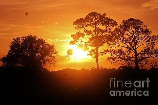 Sublime Sunrise by Keri West