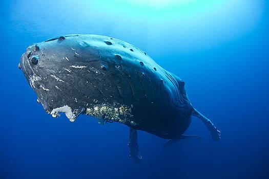 Submarine by David Valencia