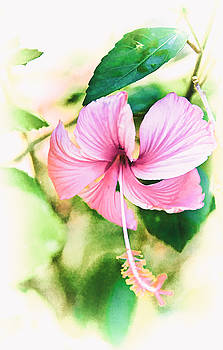 Subtle Pink Hibiscus by Lynn Andrews