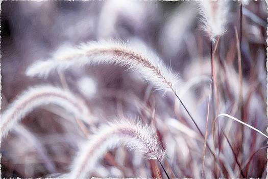 Subtle Reeds by Chris Hood