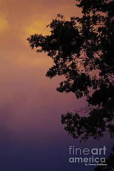 Subtle sunset by Tannis Baldwin