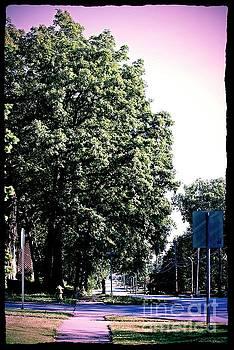 Frank J Casella - Suburban Tree