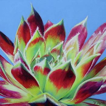 Succulent #1 by Deborah Plath