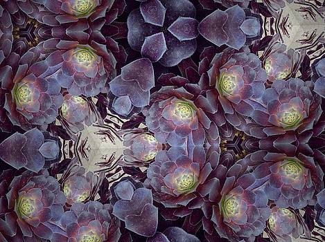 Succulent and Lavender by Sylvan Adams