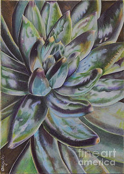 Succulent by Angela Armano