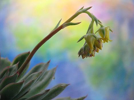 Angela Davies - Succulent At Dawn
